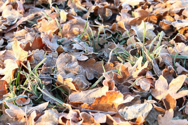 frost-83832_1280
